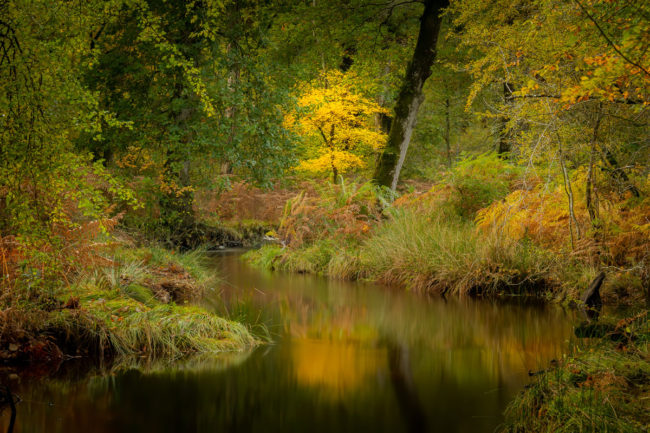 New Forest stream in a glade