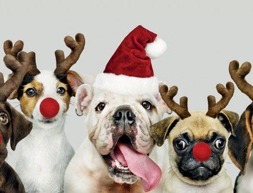 Christmas Dogs Oakhaven Hospice Christmas card