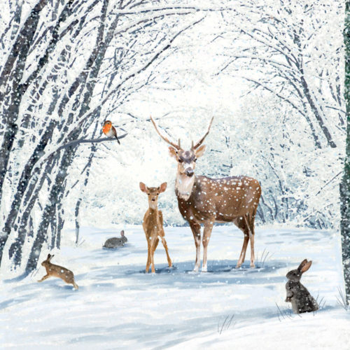 New Forest Animals Oakhaven Hospice Christmas card